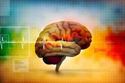 Marijuana THC, CBD And The Brain